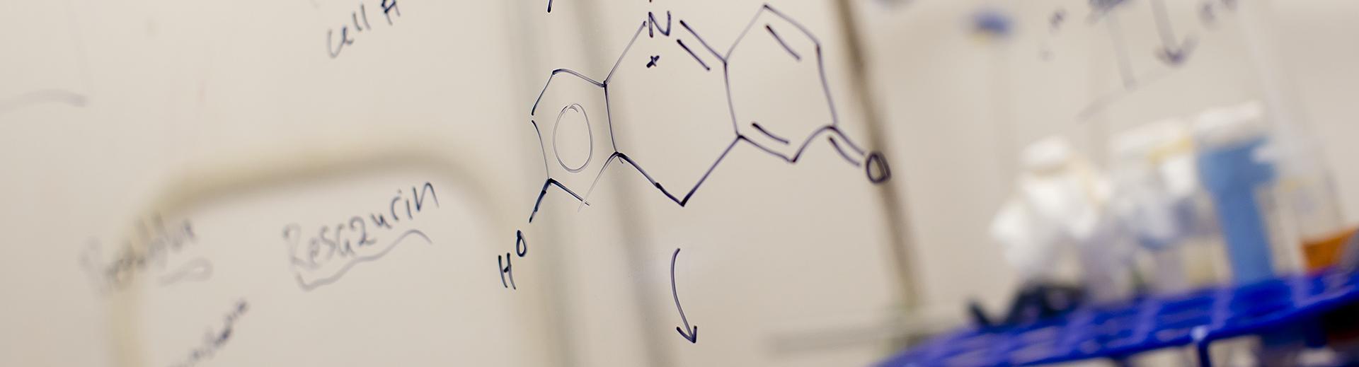 Formulas written on board in a bioengineering classroom